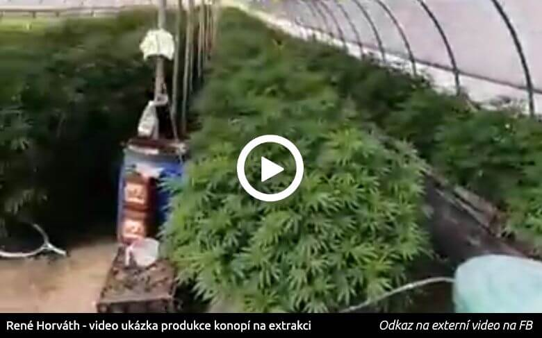 Náhled videa ze Švýcarského skleníku s konopím